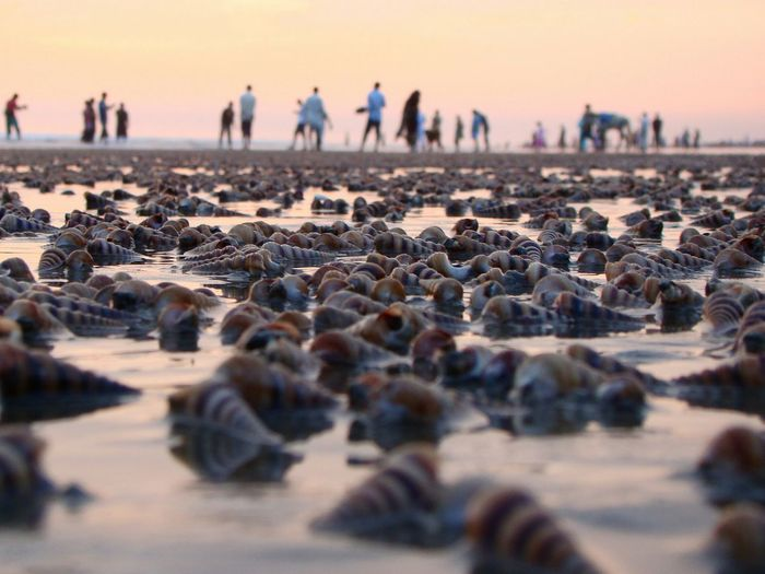 Sea Seasunset Nature People Bangladesh Cox's Bazar The Great Outdoors With Adobe Fossil Seabeach