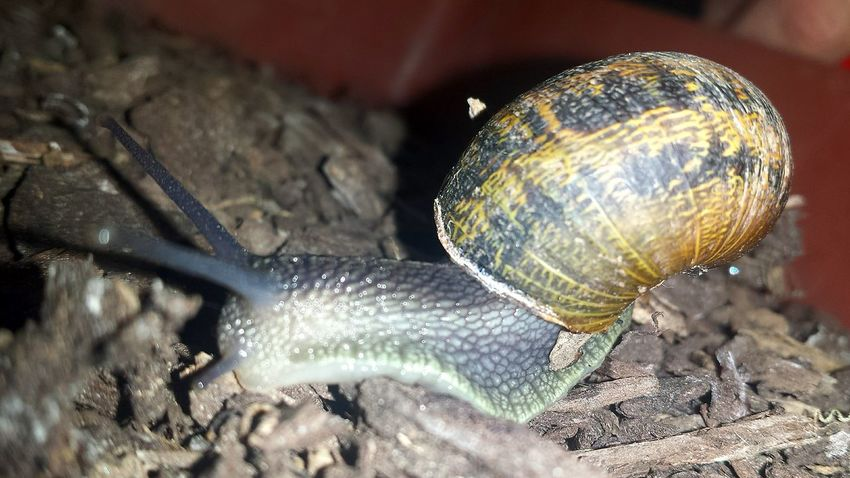 Snail🐌 Snail Photography Nature Insect