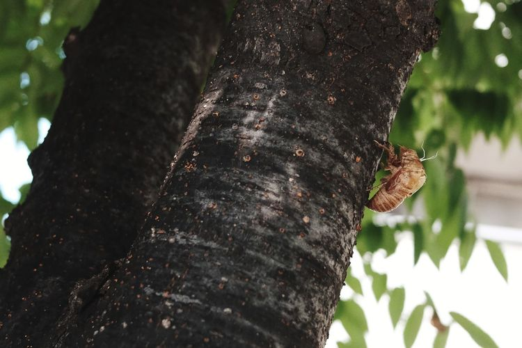 Tree Closing Insect Close-up