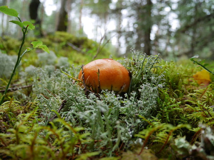 Autumn Autumn Colors Beauty In Nature Close-up Day Estonian Nature Forest Green Color Growth Mushroom, Nature Outdoors First Eyeem Photo