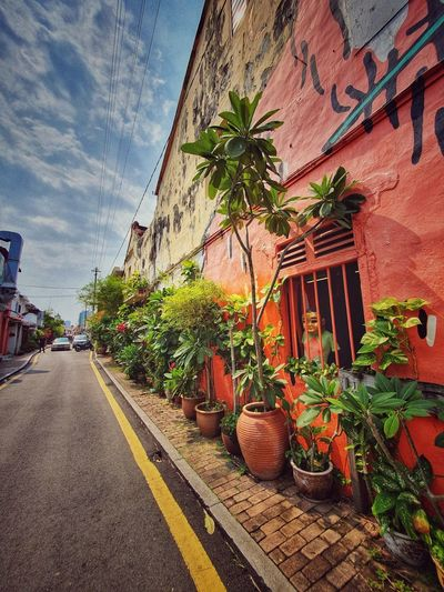 Potted plants on road by building against sky