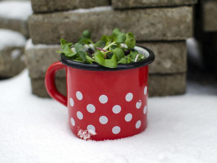 Close-up Day Enamel Mug Food Freshness Healthy Eating Indoors  Microgreens No People Polka Dot Red Vegan Food Vegetable
