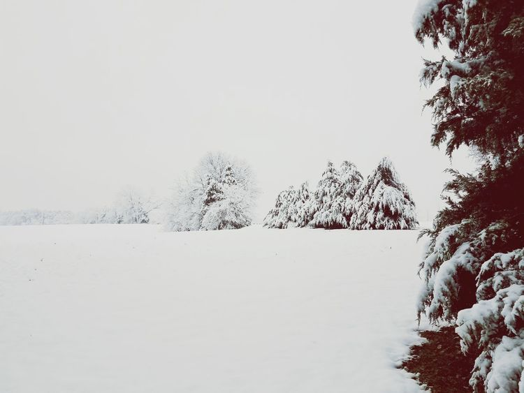Snow Field Snow Winter Cold Temperature Tree Nature Outdoors No People Tranquility Day Landscape Beauty In Nature Sky Clear Sky Pixelated
