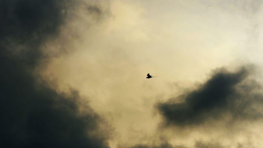Birds Afternoon Sky Mauritius Island