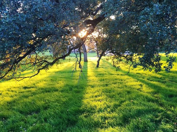 Luscious Green Wild Grass!! So good!! 🌿 Grass Sunlight Tree Shadow Green Color Field Nature Outdoors Sun Day You Had Me At Nature Nature Photography EyeEm Nature Lover Beauty In Nature California Love Lifestyles Growth Trees My Year My View