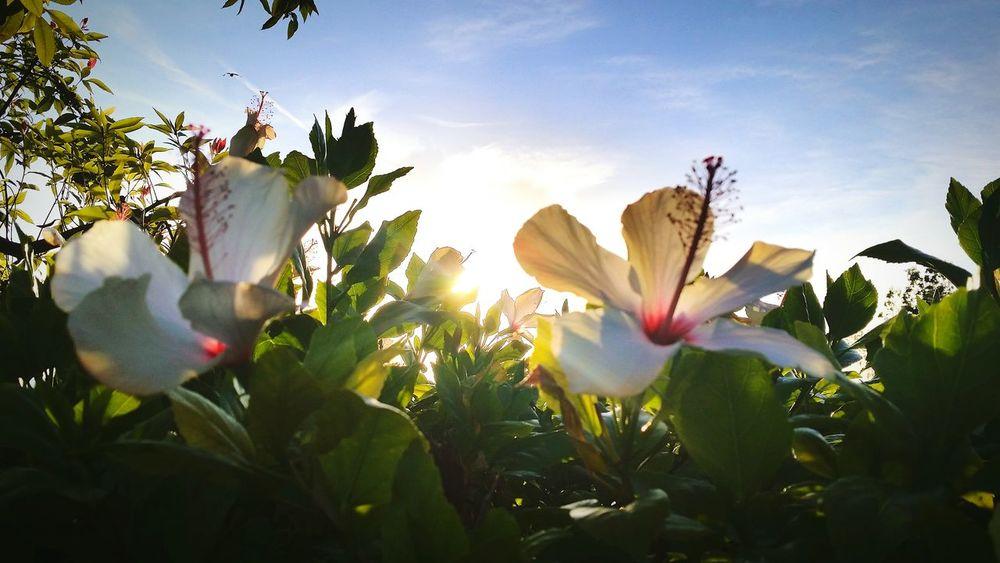 Beautiful Bloom Morning Sunrise Flowers N Sunshine