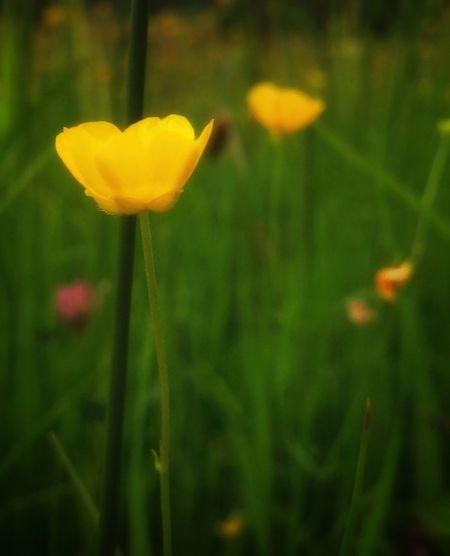 🌼 Flower Yellow Tadaa Community EyeEm Nature Lover Eyem Nature Eye4photography  Daswasichsehe😊
