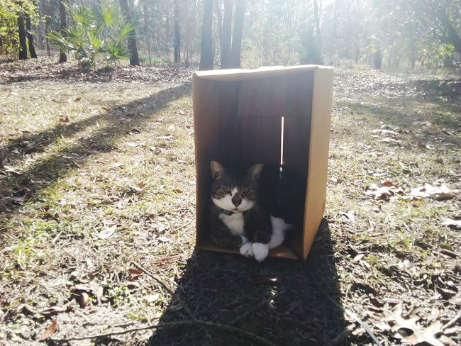 miss Puddy enjoying her box One Animal Domestic Cat Pets Animal Themes Domestic Animals Mammal Feline Sunlight No People Shadow Outdoors Nature Day