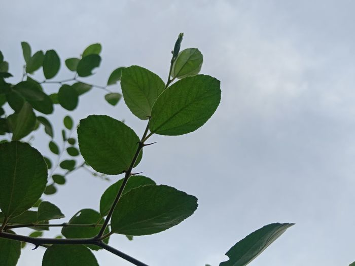 Low angle view of leaves against sky