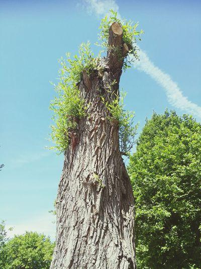 Tree Tree Trunk Blue Branch Sky