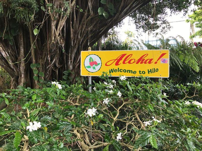 Hawaii, Hilo, Aloha, Sign, Tree, Welcome, Hello, Tropics, Island