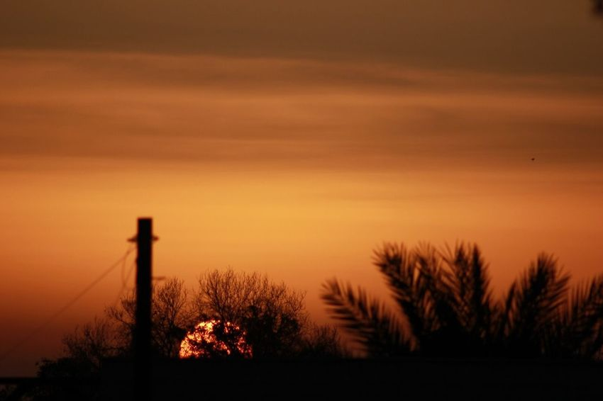 Sunset Silhouette Orange Color Sky Tree Nature Beauty In Nature No People Outdoors Scenics