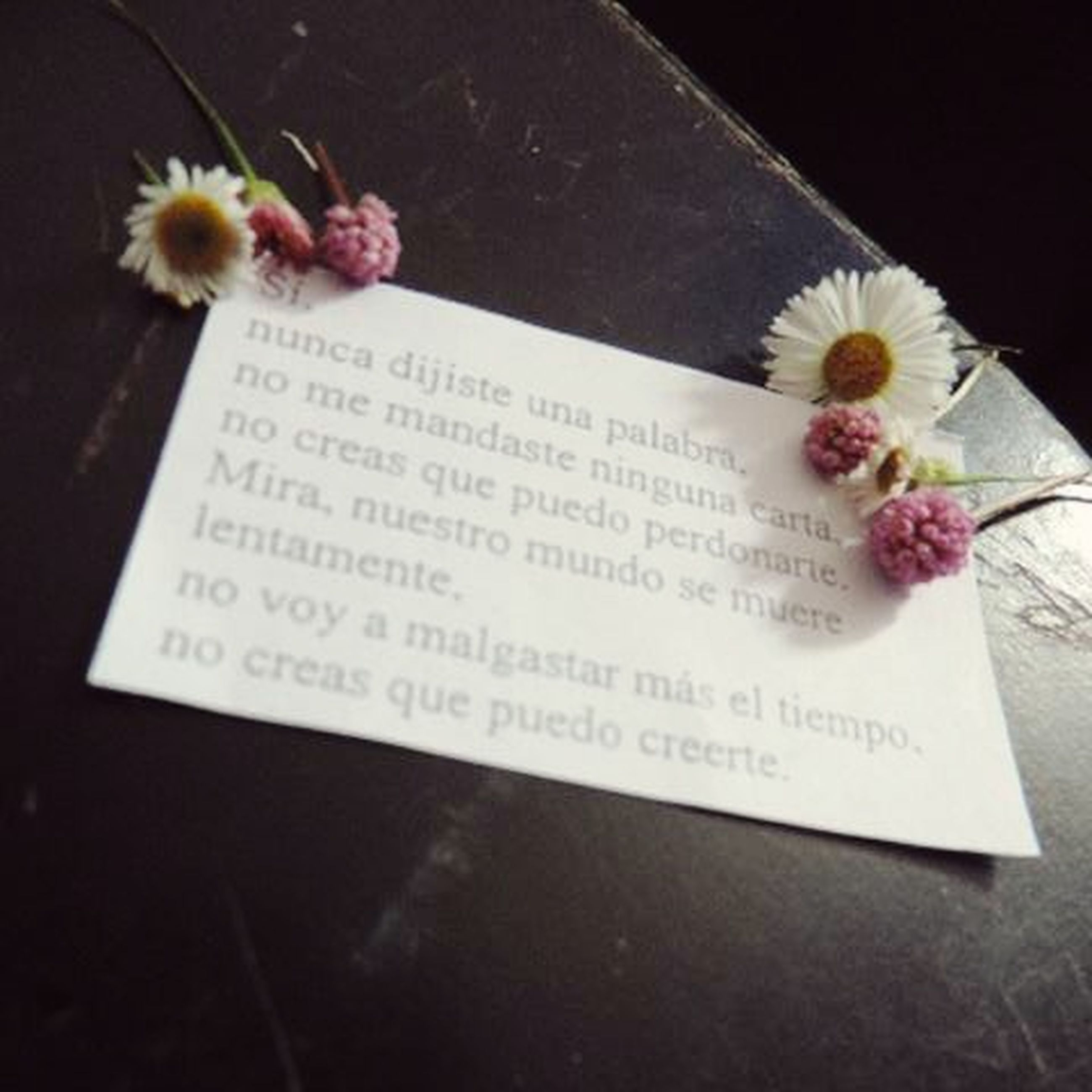 text, flower, indoors, western script, paper, table, studio shot, freshness, still life, close-up, book, communication, high angle view, petal, black background, fragility, no people, flower head, open, white color