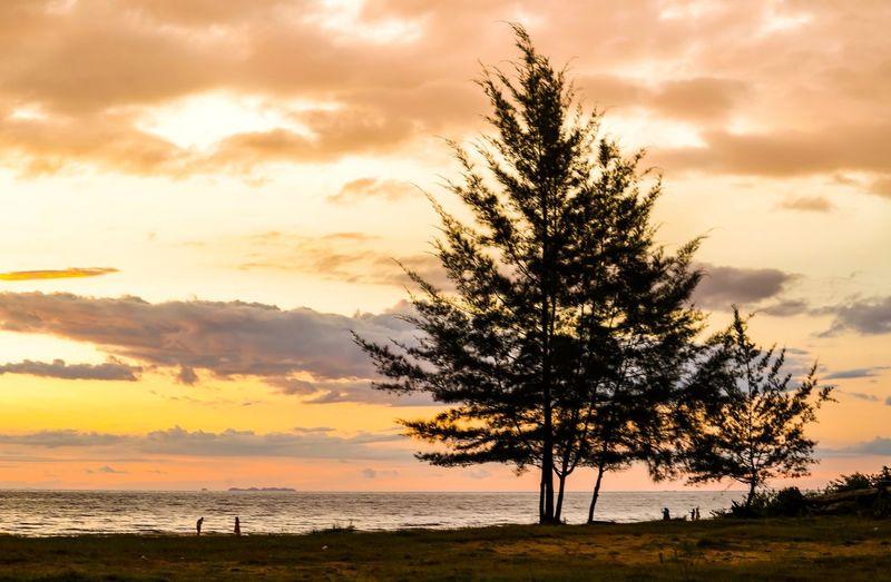 Tree Sky Sunset