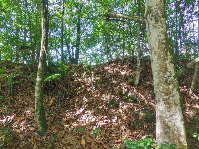 GoPro Hero6 DuaEnamKosongLima Tree Day Growth Nature Forest Outdoors No People Low Angle View Tree Trunk Branch Beauty In Nature