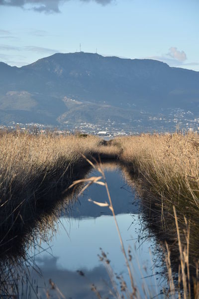 Corsican Islande Water Lake Tree Bird Reflection Sky Grass Cloud - Sky Tranquil Scene Blooming Marsh Reed - Grass Family Mountain Range Idyllic Wetland Swamp Cattail Agricultural Field Growing Countryside Farmland Calm Rocky Mountains Tranquility Scenics Snow Covered Cultivated Land