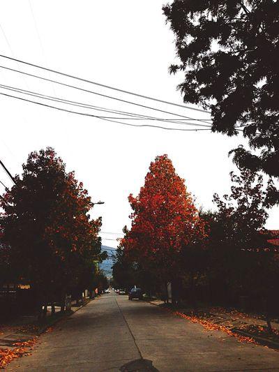 Autumn💕 First Eyeem Photo Autumn Colors Lovely