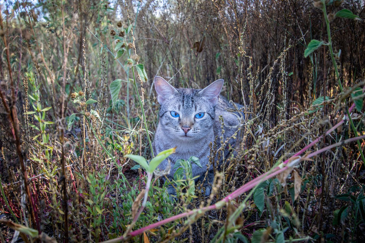 Portrait of cat on field in forest