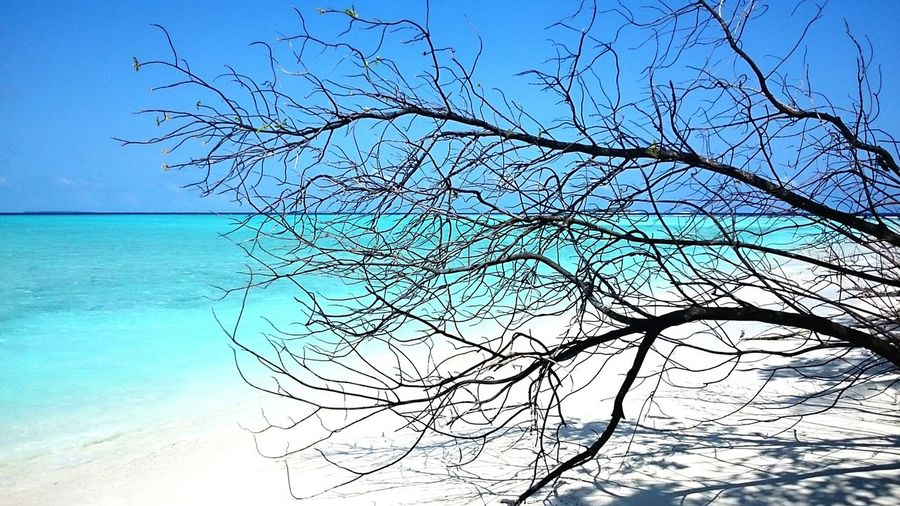 Beach Sea Branches WhiteSandBeach