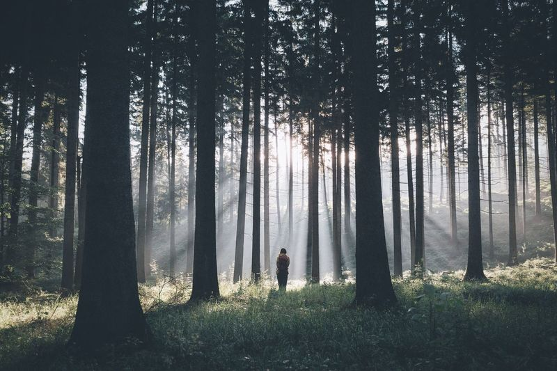 Rear View Of Person Standing Amidst Trees In Forest