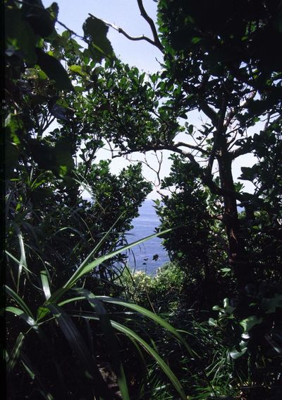 山の上から見える景色を Reversalfilm を入れた Filmcamera で 撮りました 。カメラは NikonF3HP 、 Japan 千葉県 鴨川市 EyeEm Nature Lover Nature Hello World