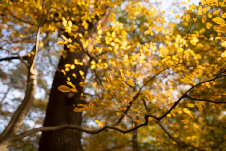 Tree Plant Branch Low Angle View Beauty In Nature Growth Yellow Day Nature Change Focus On Foreground Autumn Outdoors No People Tree Trunk Trunk Flowering Plant Flower Leaf Plant Part Springtime Autumn Collection Natural Condition