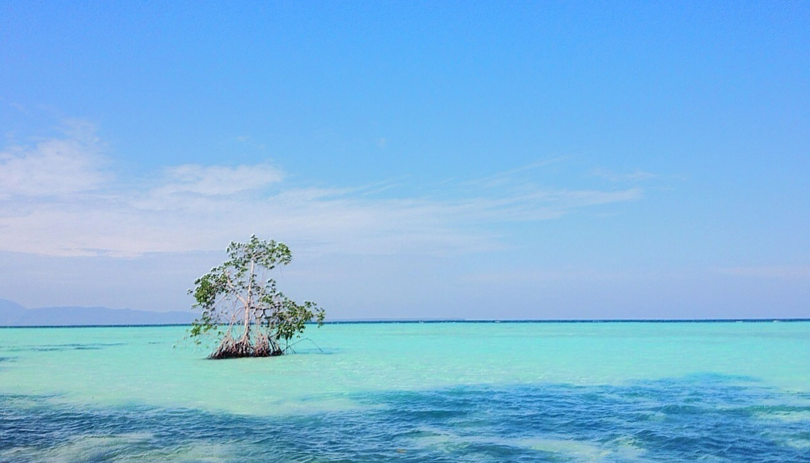 water, sea, blue, tranquil scene, tranquility, scenics, waterfront, horizon over water, beauty in nature, sky, nature, copy space, idyllic, tree, rippled, calm, seascape, clear sky, day, ocean
