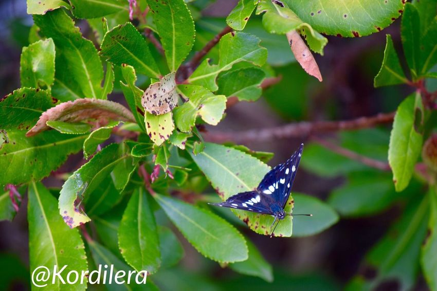 Butterflies Of Montenegro Черногория Montenegro Butterfly Collection Crna Gora Ig_worldclub Traveling Travel Foto IPhone Photography Taking Photos Travel Photography путешествия Hello World Kotor Bay