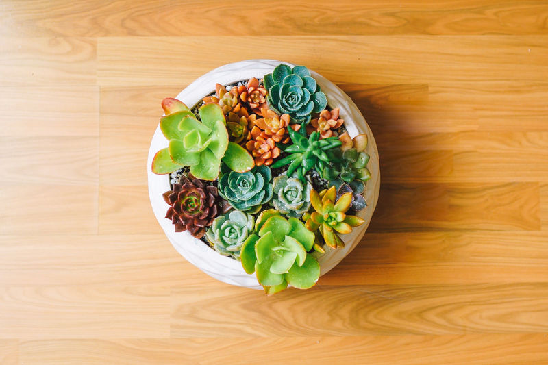 Day Food Food And Drink Freshness Healthy Eating High Angle View Indoors  Leaf No People Ready-to-eat Table Wheat Wood - Material