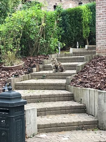 Steps Staircase Steps And Staircases Outdoors Tree Day No People Built Structure Architecture Nature Building Exterior