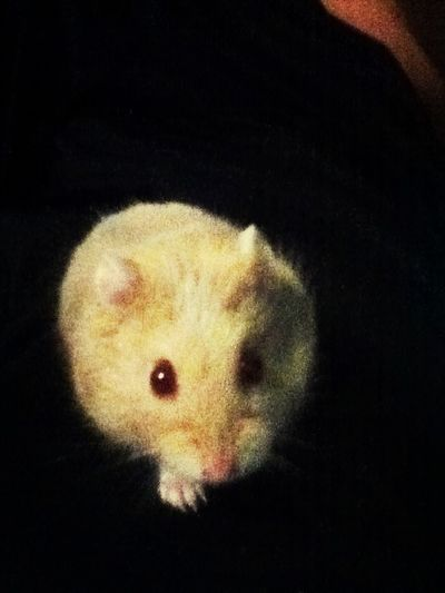 My hamster smokey lol (;