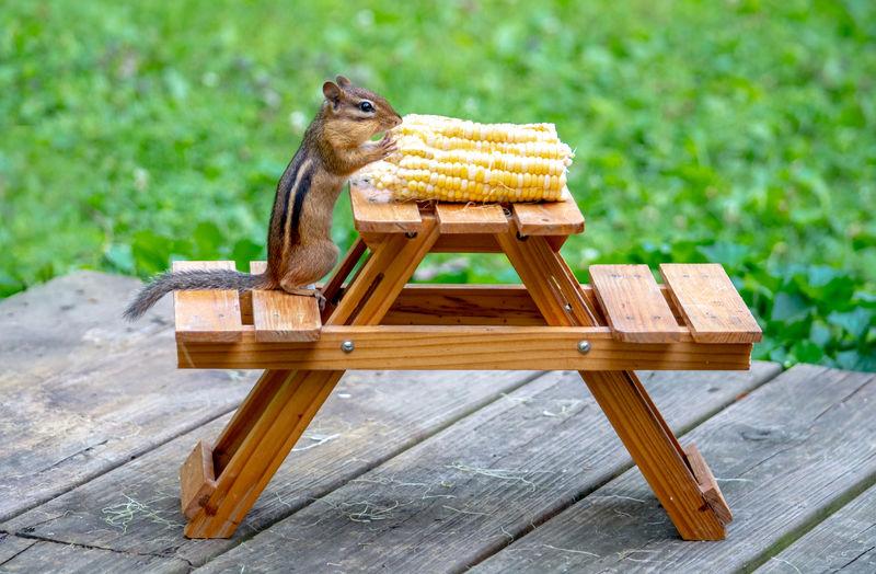 Lizard on wooden table