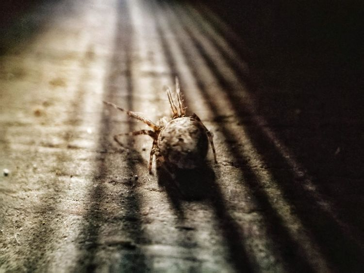Way lingaw.... Mobilephotography Animals In The Wild One Animal Animal Themes Insect Close-up Animal Wildlife Shadow Spider Macro Photography Sunray Of Light Macroshot Cebu Philippines EyeEm Phillipines