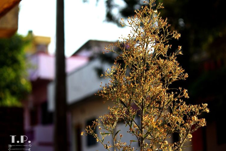 Growth Focus On Foreground Plant Day No People City Life Canon Canon700d Canonphoto Grid Beutiful  Beauty In Nature Beauty Colors