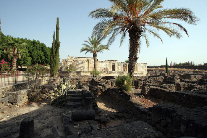 Ruins of the old Roman town, Capernaum, Israel Ancient Ancient Civilization Archaeological Architecture Belief Biblical  Capernaum Capharnaum Galilee Historic History Holy Holy Land Israel Middle East Palm Tree Roman Empire Ruin Town Tree Village