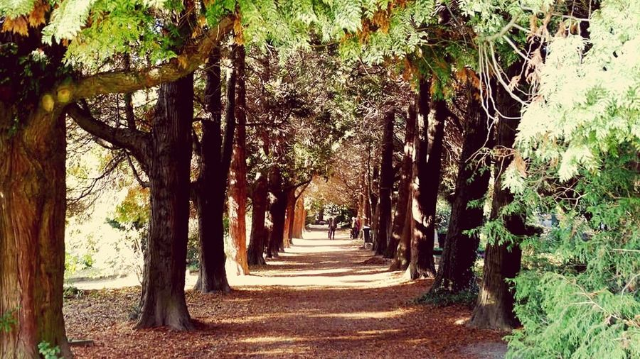 Pathway along trees in forest