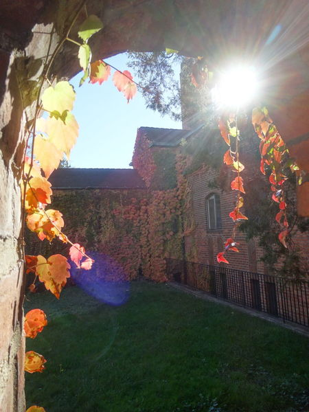 Through the arched window... Sunlight Sky Outdoors Multi Colored Growth Nature Architecture Nature No Filter No Edit The Purist(No Edit,no Filter) Nature_collection Showcase: February Beauty In Nature Nature Lover EyeEm Best Shots Windows_aroundtheworld The City Lights