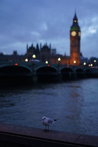 Image Of A Seagull With Big Ben At The Distance