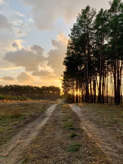 Dirt road amidst trees against sky during sunset
