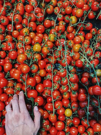 Red cherry tomatoes for sale in market