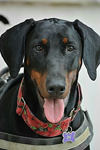 Xaria Dog Portrait EyeEm Selects EyeEmNewHere