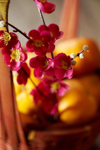 Close-up of pink flower vase