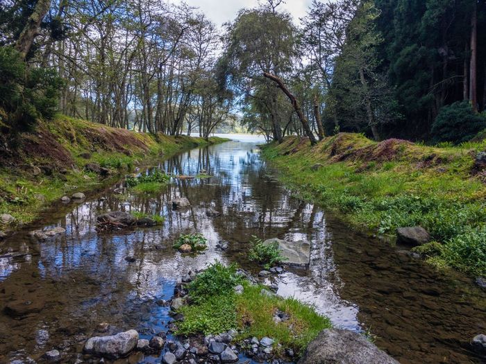 Tree Nature Tranquil Scene Beauty In Nature Tranquility Water Scenics River Forest Outdoors Non-urban Scene Day No People Growth Landscape Sky Furnas Azores Portugal