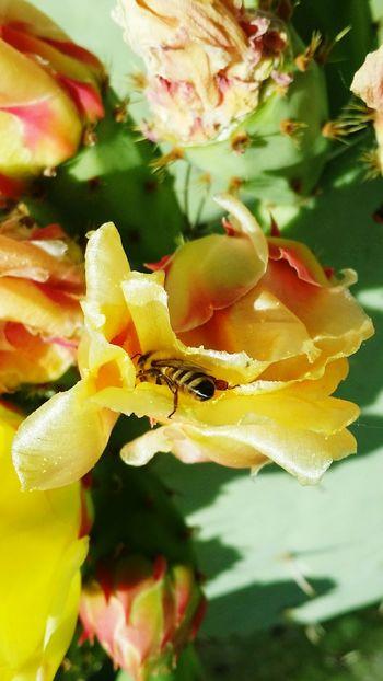 Bees are beautiful 🐝 Pollination Wildlife Beautyinmyeyes Bee