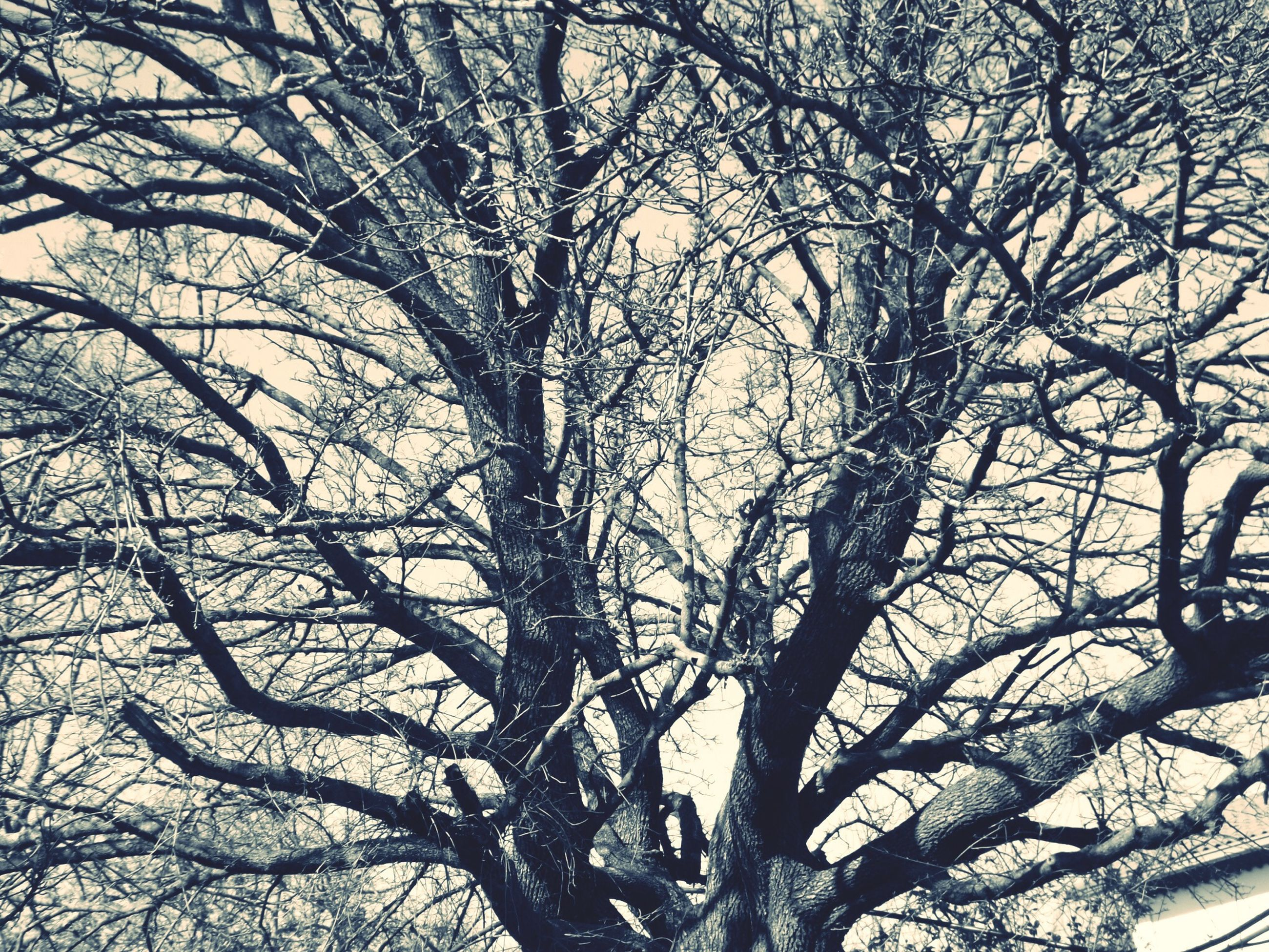 bare tree, branch, tree, low angle view, nature, silhouette, tranquility, tree trunk, sky, beauty in nature, outdoors, no people, backgrounds, full frame, day, growth, scenics, dead plant, dried plant, tranquil scene