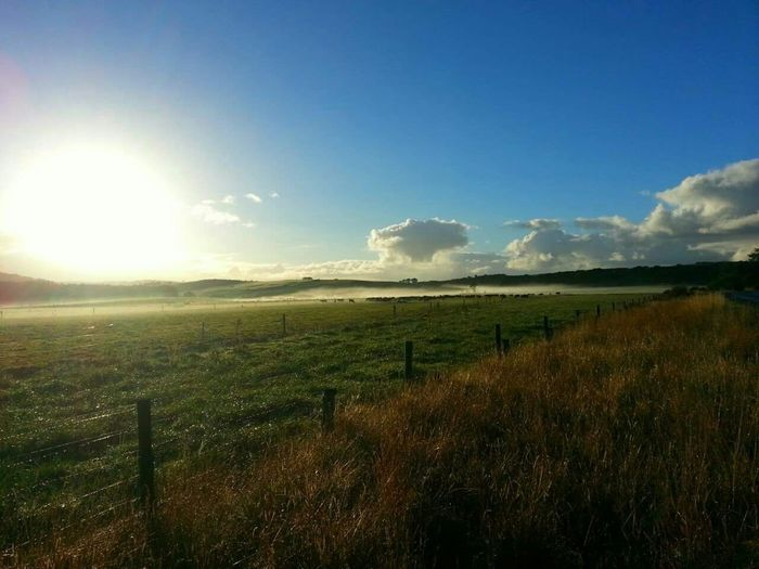 Mt Compass Pasture Dairyfarming Sunrise Fog