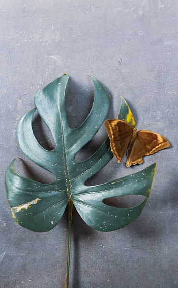 Close-up of butterfly on leaf at table