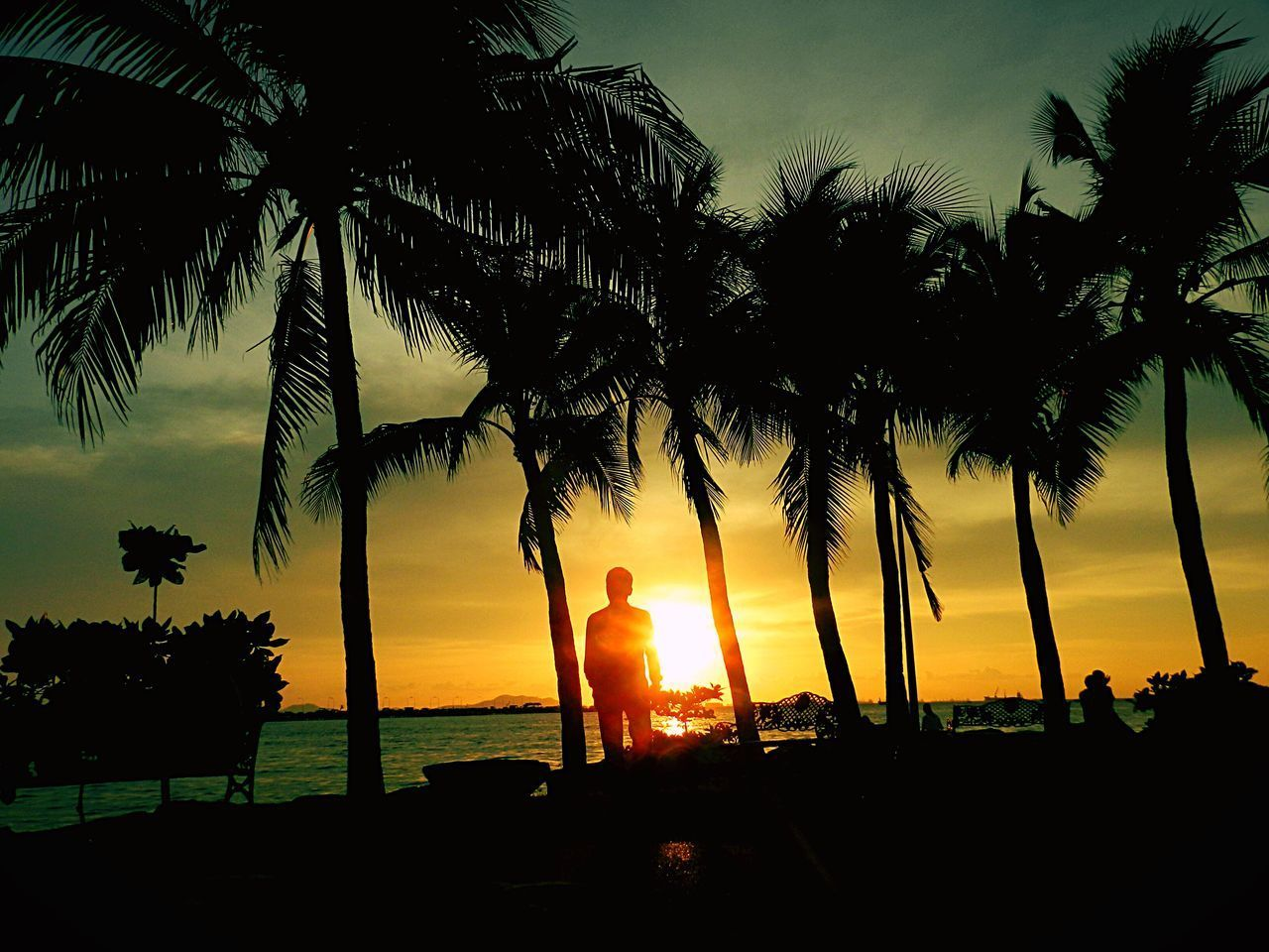 palm tree, sunset, tree, silhouette, nature, beauty in nature, scenics, sun, tree trunk, sea, growth, beach, sky, idyllic, tranquility, tranquil scene, outdoors, lifestyles, water, real people, horizon over water, one person, people