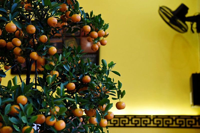 New Year Around The World Celebration Yellow Color Fruit Food And Drink Citrus Fruit Freshness Food Tree Day Branch Close-up Leaf