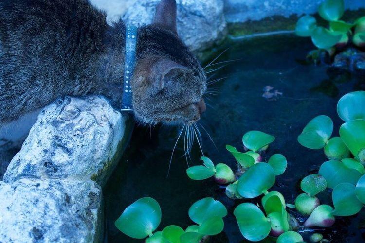 ねこ ねこ 猫 Cat 水分補給 沖縄 日本 スナップ Snap Japan オキナワ Okinawa